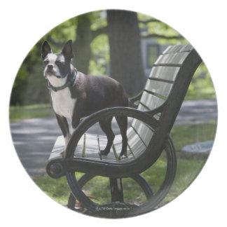 Boston Terrier Melamine Plate