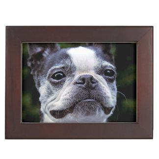 Boston Terrier Memory Box
