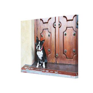 Boston Terrier - Miles Canvas Print