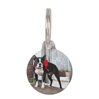Boston Terrier - Miles Pet Tags