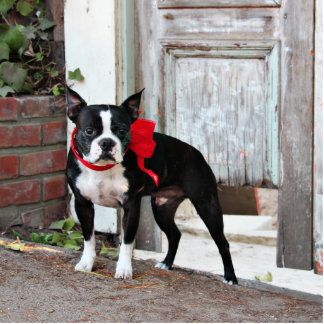 Boston Terrier - Miles Acrylic Cut Out