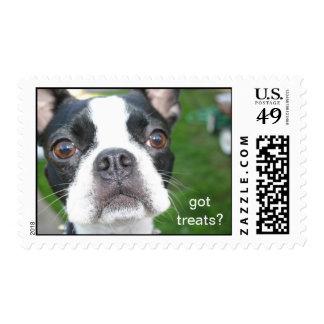 boston terrier Mochi Stamp