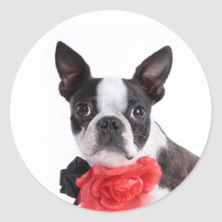 Boston Terrier Mollie mouse child Classic Round Sticker