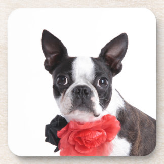 Boston Terrier Mollie mouse child Drink Coaster