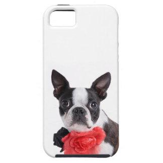 Boston Terrier Mollie mouse child iPhone SE/5/5s Case