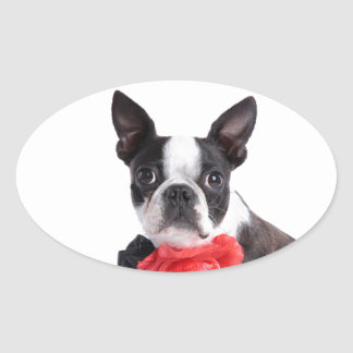 Boston Terrier Mollie mouse child Oval Sticker