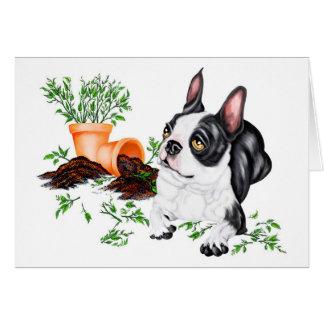 Boston Terrier Naughty Pup Card