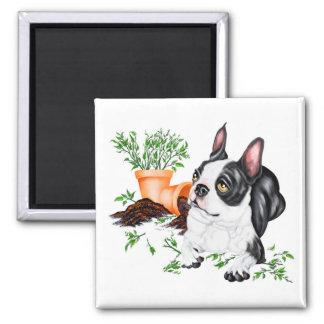 Boston Terrier Naughty Pup Magnet