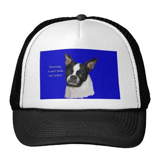 Boston Terrier:  No puede llevar a cabo su licker Gorro
