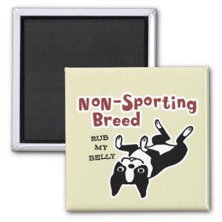 "Boston Terrier ""Non-Sporting Breed"" 2 Inch Square Magnet"