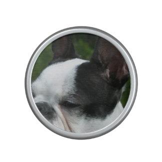 Boston Terrier Speaker