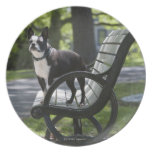Boston Terrier Party Plate