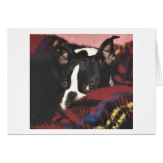 Boston Terrier:  Peek-a-Boo Card