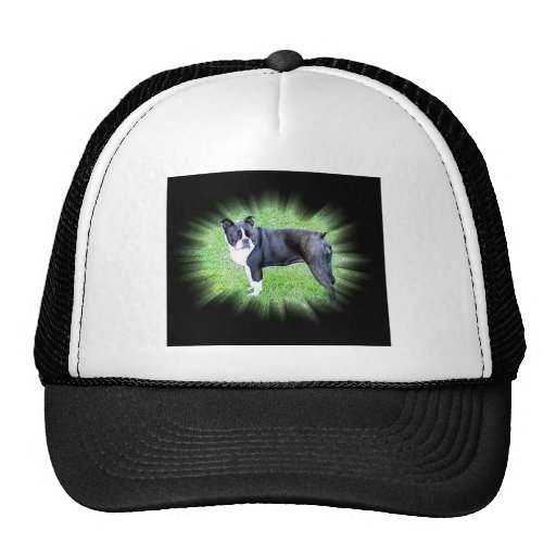 Boston Terrier:  Perfect Hat