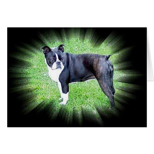 Boston Terrier:  Perfecto Tarjeta De Felicitación