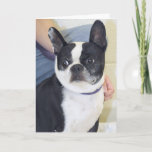 Boston Terrier Photo Card
