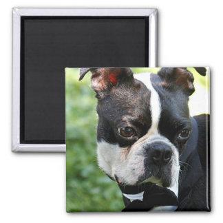 Boston Terrier photo Magnet