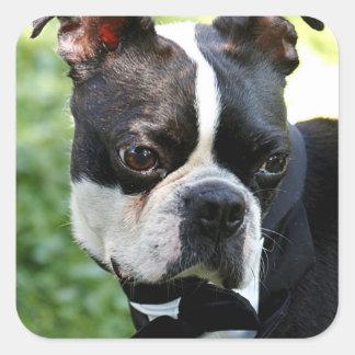 Boston Terrier photo Square Sticker