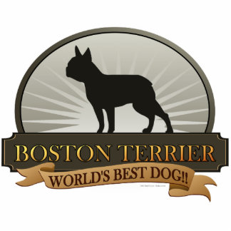 Boston Terrier Photo Cutout