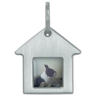 Boston Terrier Placas Mascota