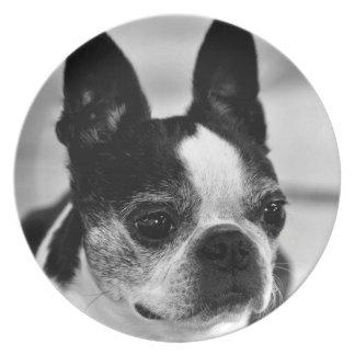Boston Terrier Plato De Cena