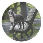 Boston Terrier Plato De Comida
