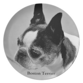 Boston Terrier Plato Para Fiesta