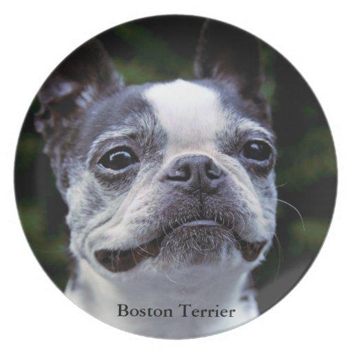 Boston Terrier Platos De Comidas
