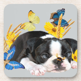 Boston Terrier Play Day Drink Coaster