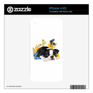 Boston Terrier Play Day iPhone 4S Decals