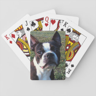 Boston_Terrier.png Card Deck