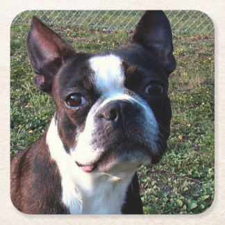 Boston_Terrier.png Square Paper Coaster