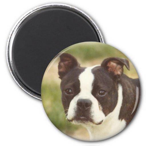 Boston Terrier:  Poca belleza Imán Redondo 5 Cm