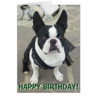 Boston Terrier portrait greetings card