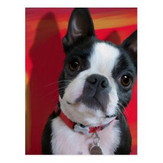 Boston Terrier Post Card