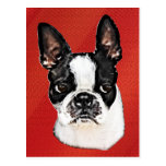 Boston Terrier Post Cards
