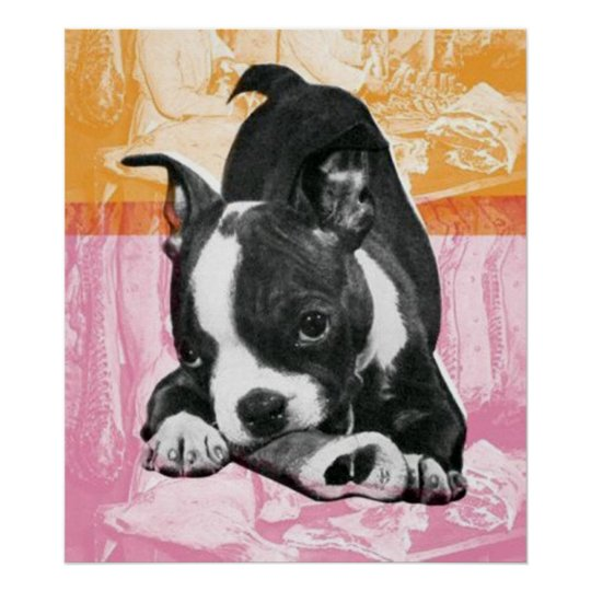 Boston Terrier - poster