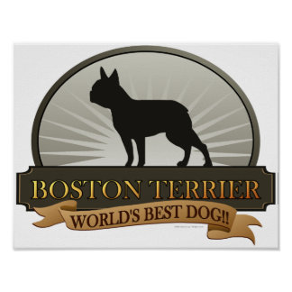 Boston Terrier Posters