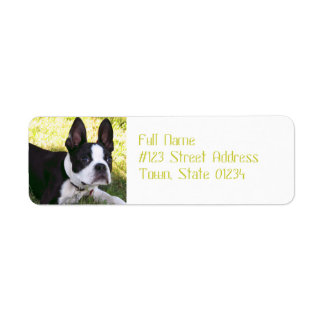 Boston Terrier Pup Mailing Labels