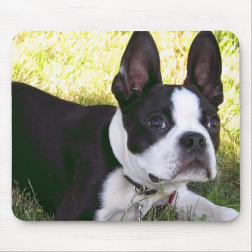 Boston Terrier Pup Mouse Pad