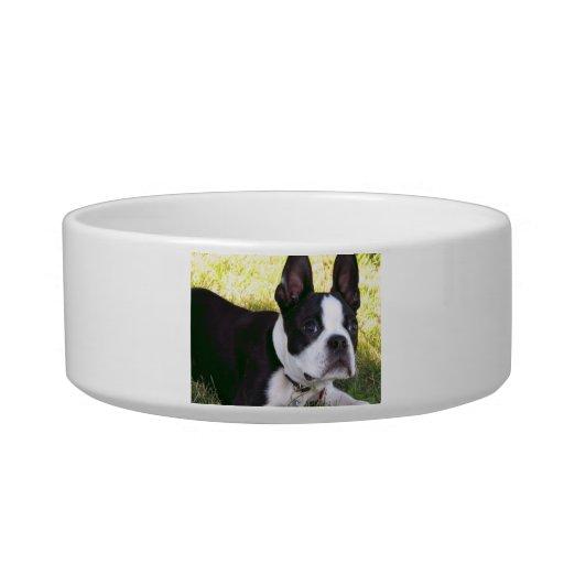 Boston Terrier Pup Pet Bowl