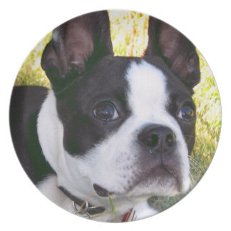 Boston Terrier Pup Plate
