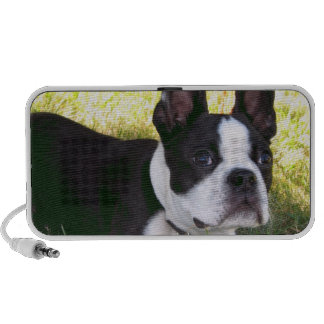 Boston Terrier Pup Portable Speakers