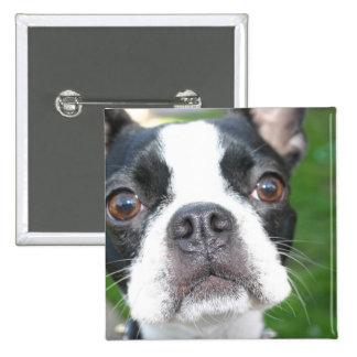 Boston Terrier Pup Square Button