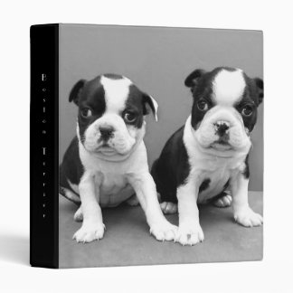 Boston Terrier puppies binder