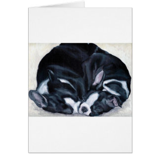 Boston Terrier Puppies Card