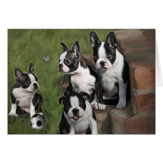 Boston Terrier Puppies Greeting Card