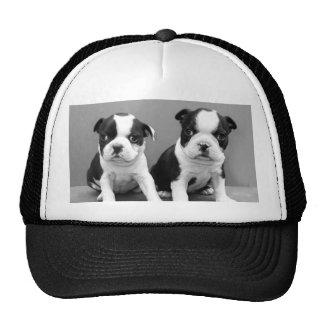 Boston Terrier Puppies hat