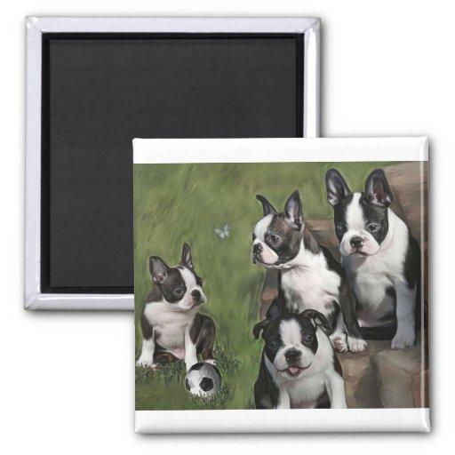 Boston Terrier Puppies Magnet