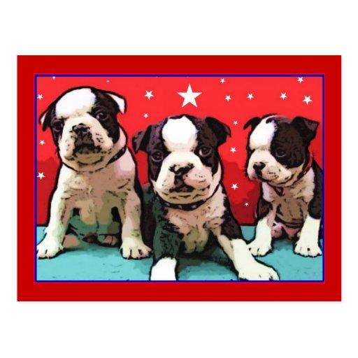 Boston Terrier puppies postcard